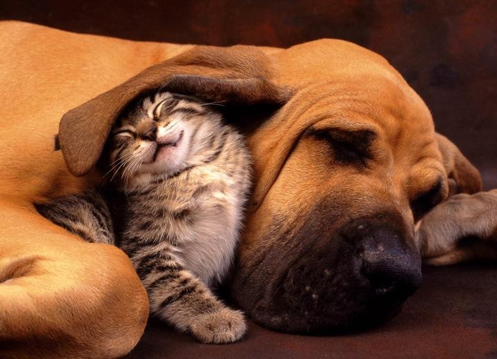 Наши любимые домашние животные