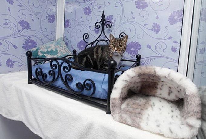 Пятизвездочный отель для кошек в Лондоне