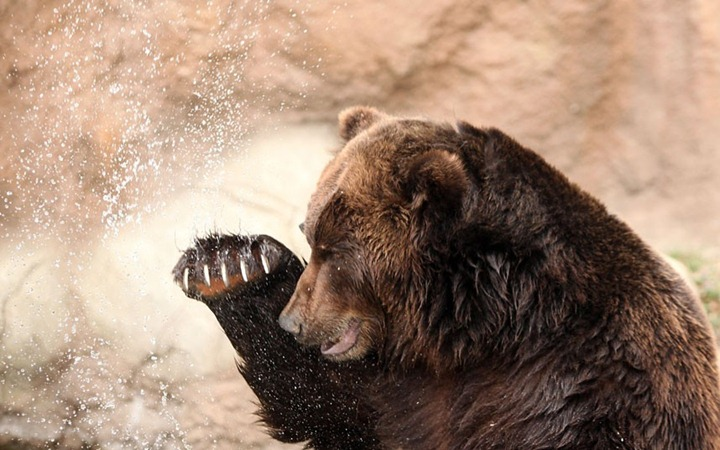 Фотографии животных от DayEvents #16