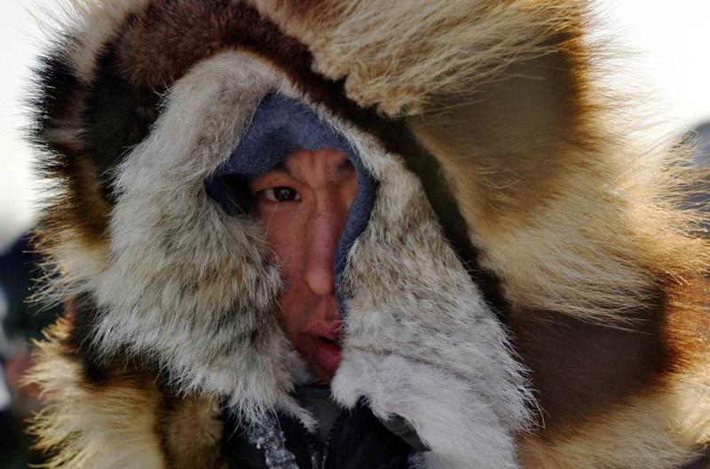 Айдитарод: гонки на собачьих упряжках от Анкориджа до Нома, Аляска